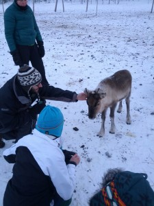 Erik the Reindeer Whisperer