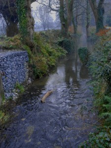 Foggy Stream