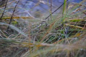 Grass Tangle